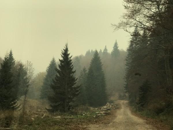 FOTO TANJUG/ ALEKSANDAR CIRIC/ nr
