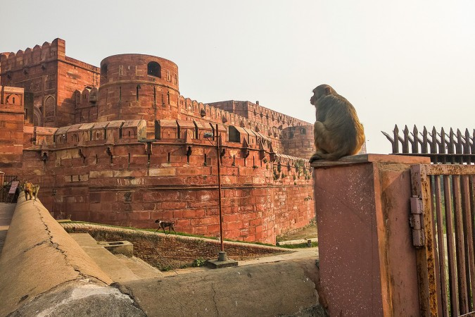 + Indija Agra tvrdjava (1)