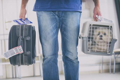putovanje, pas
